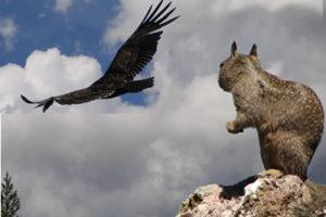 california-condor-1